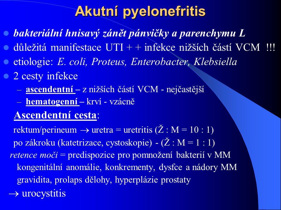 Akutní pyelonefritis bakteriální hnisavý zánět pánvičky a parenchymu L