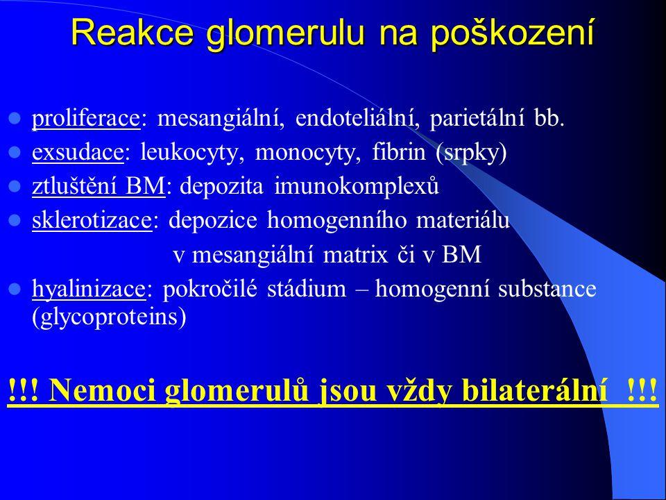 Reakce glomerulu na poškození