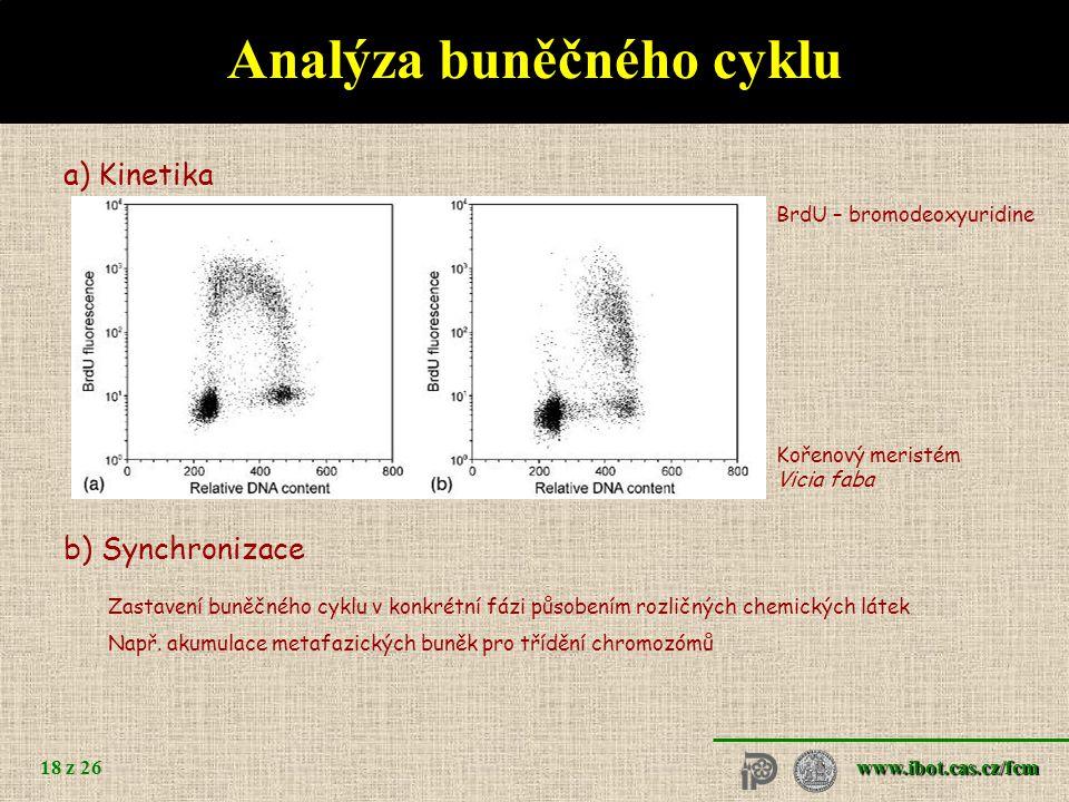 Brassica oleracea – různé stupně endopolyploidizace pletiv