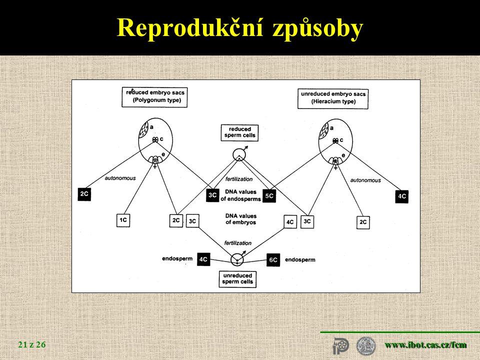 Reprodukční způsoby Taraxacum Hypericum sexuální apomiktické