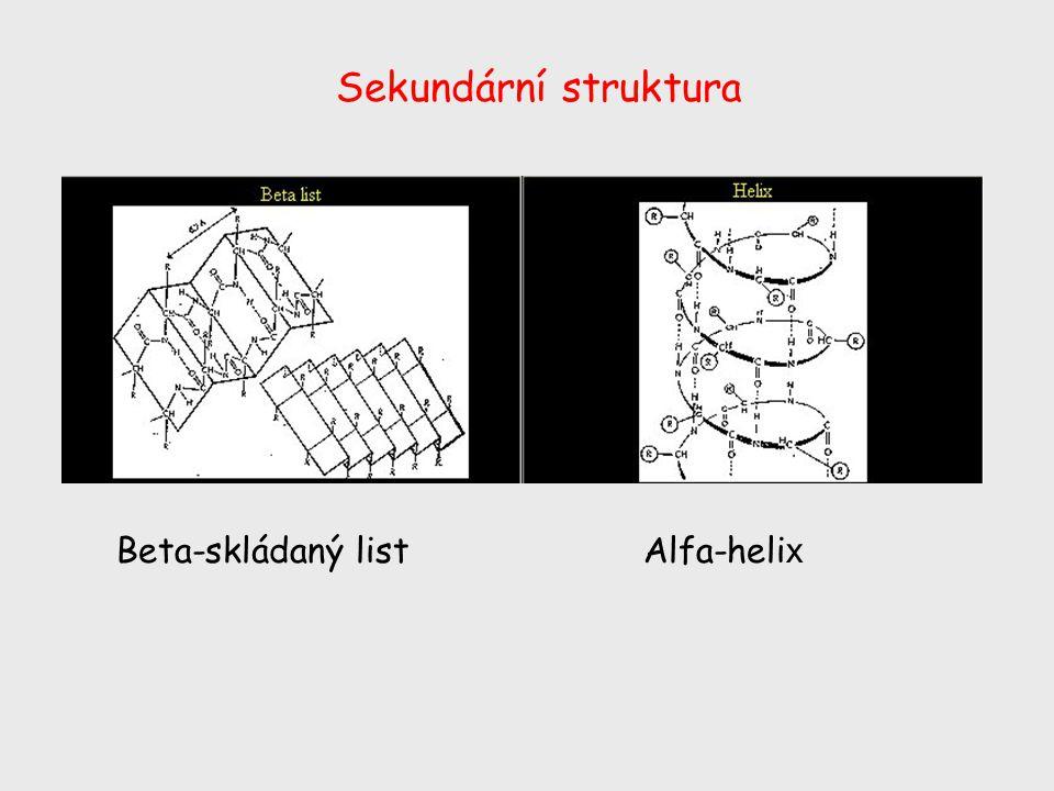 Sekundární struktura Beta-skládaný list Alfa-helix