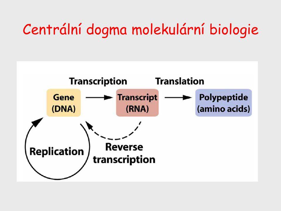 Centrální dogma molekulární biologie