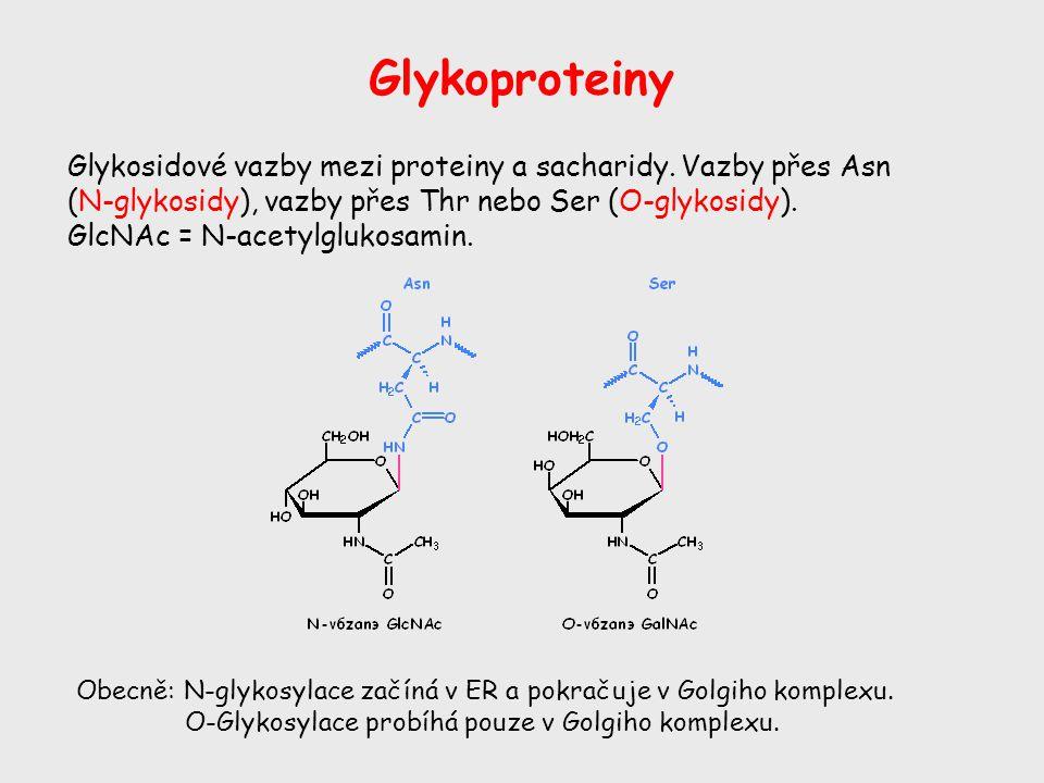 Glykoproteiny Glykosidové vazby mezi proteiny a sacharidy