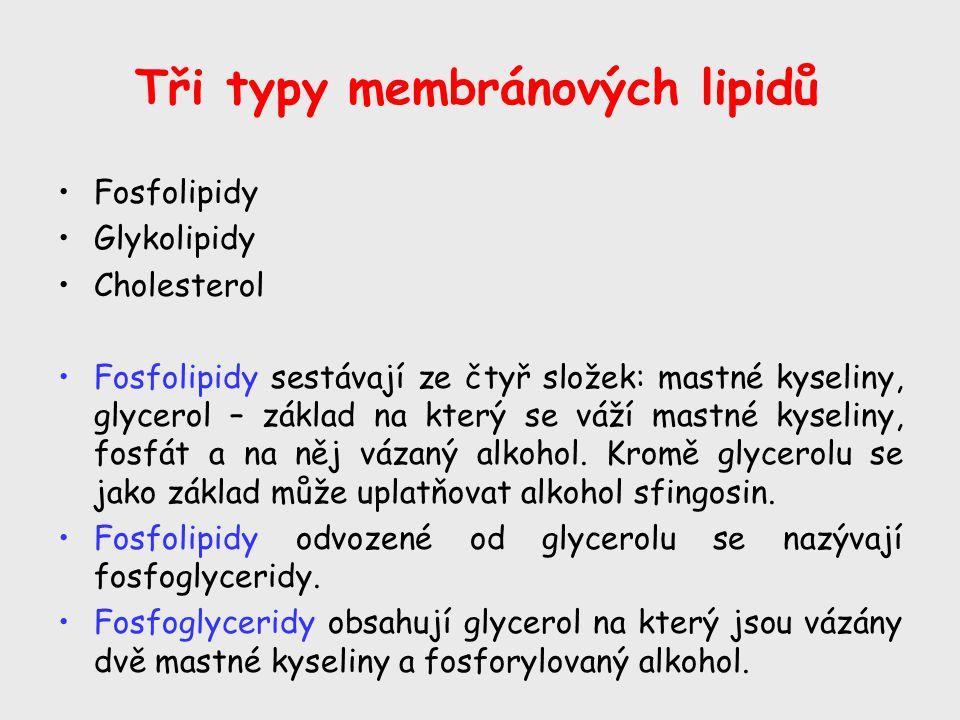 Tři typy membránových lipidů