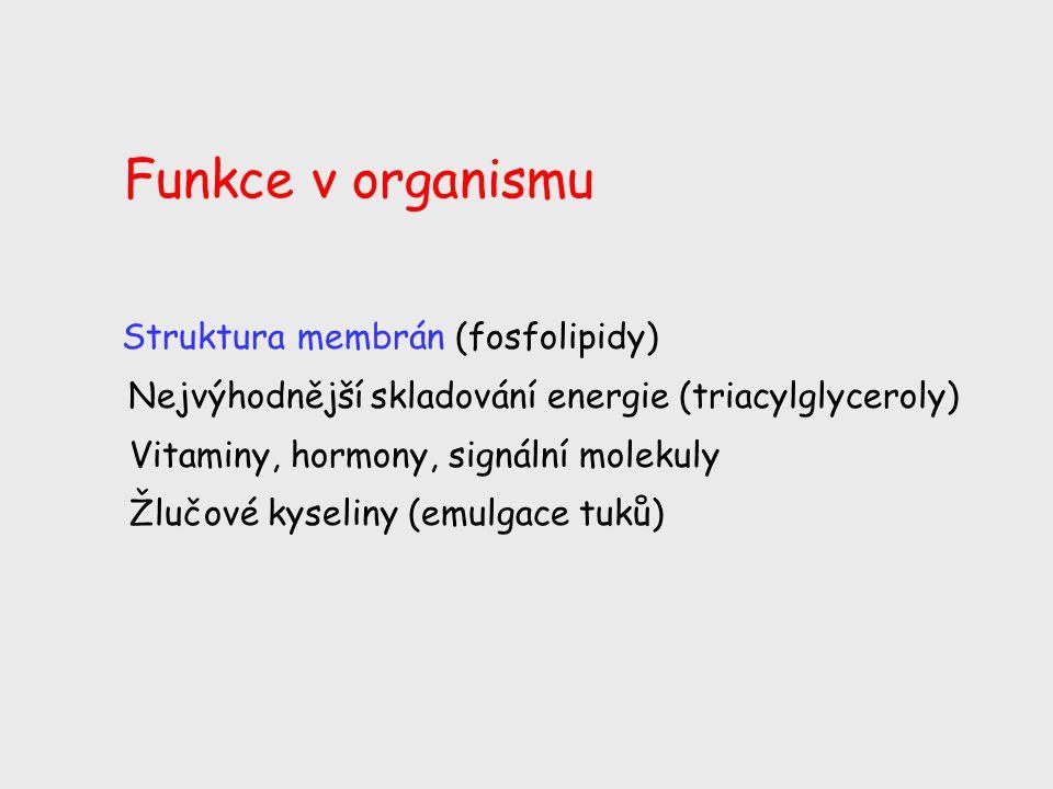 Funkce v organismu Struktura membrán (fosfolipidy)