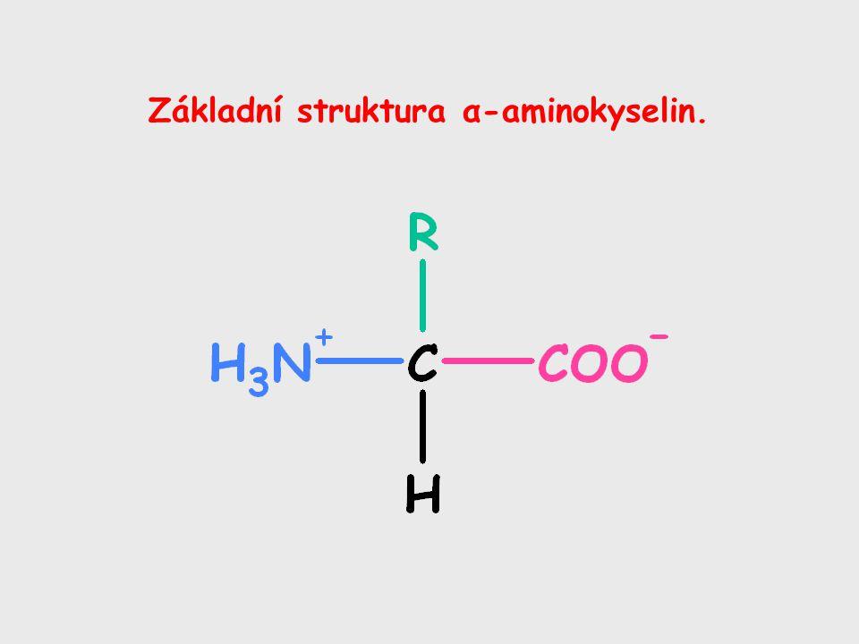 Základní struktura α-aminokyselin.