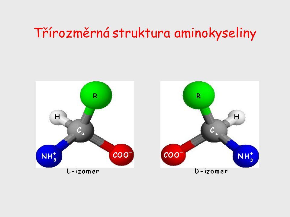Třírozměrná struktura aminokyseliny