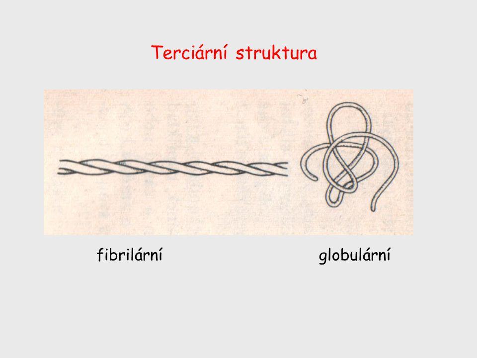 Terciární struktura fibrilární globulární