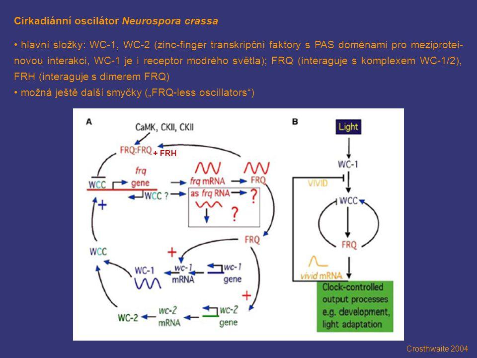 Cirkadiánní oscilátor Neurospora crassa