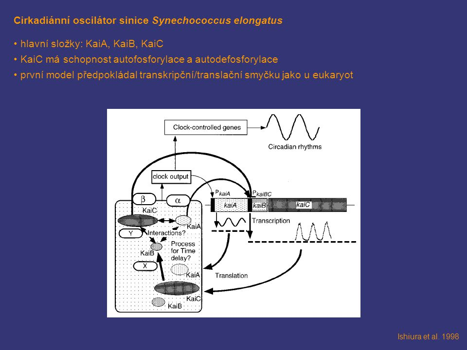 Cirkadiánní oscilátor sinice Synechococcus elongatus