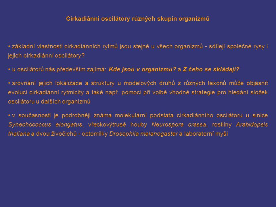 Cirkadiánní oscilátory různých skupin organizmů