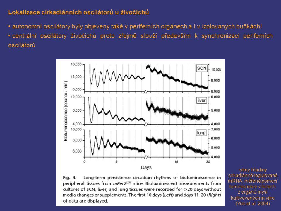 z orgánů myši kultivovaných in vitro (Yoo et al. 2004)