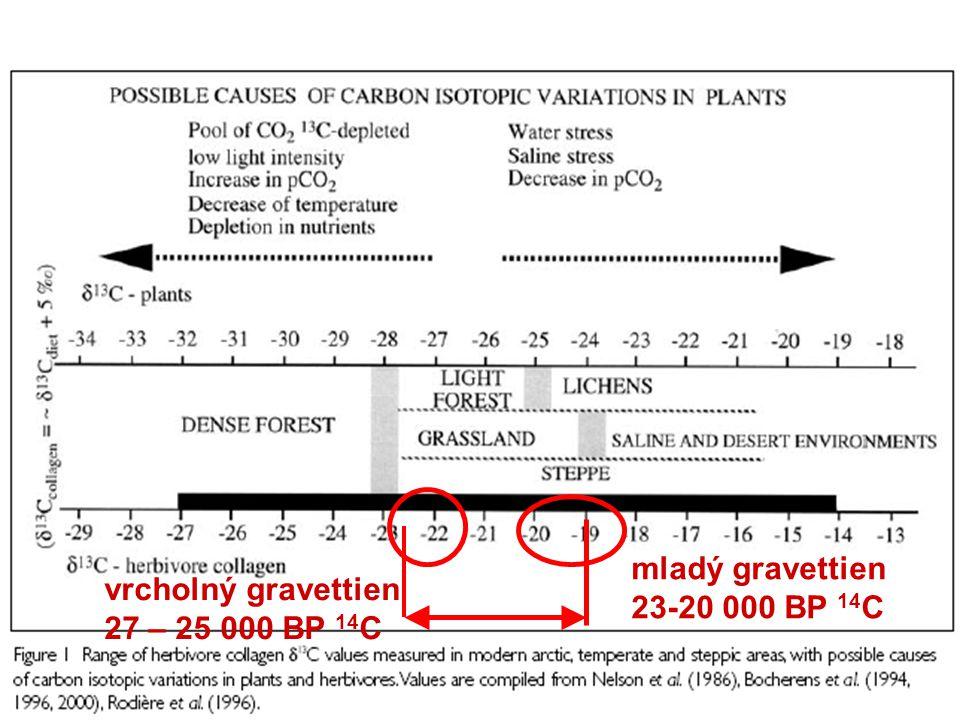 mladý gravettien 23-20 000 BP 14C vrcholný gravettien 27 – 25 000 BP 14C