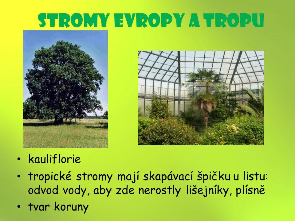 stromy Evropy a tropU kauliflorie