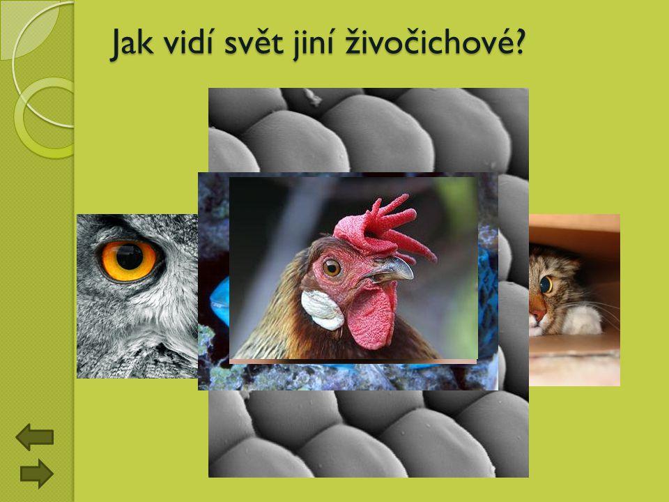 Jak vidí svět jiní živočichové