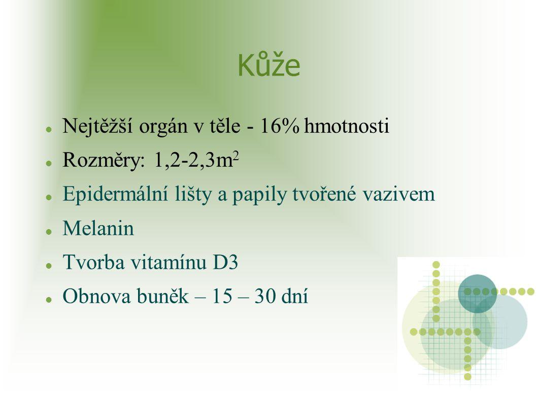 Kůže Nejtěžší orgán v těle - 16% hmotnosti Rozměry: 1,2-2,3m2