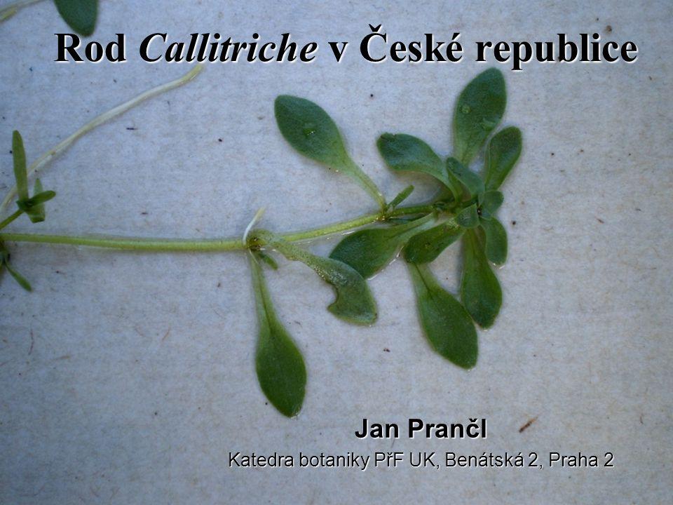 Rod Callitriche v České republice