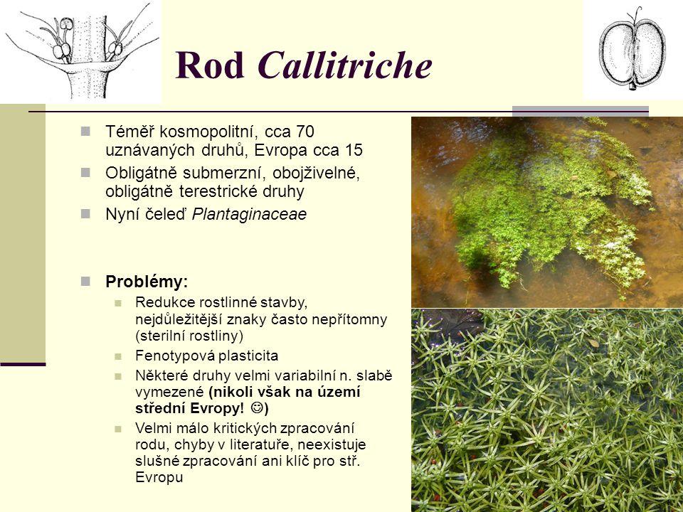 Rod Callitriche Téměř kosmopolitní, cca 70 uznávaných druhů, Evropa cca 15. Obligátně submerzní, obojživelné, obligátně terestrické druhy.