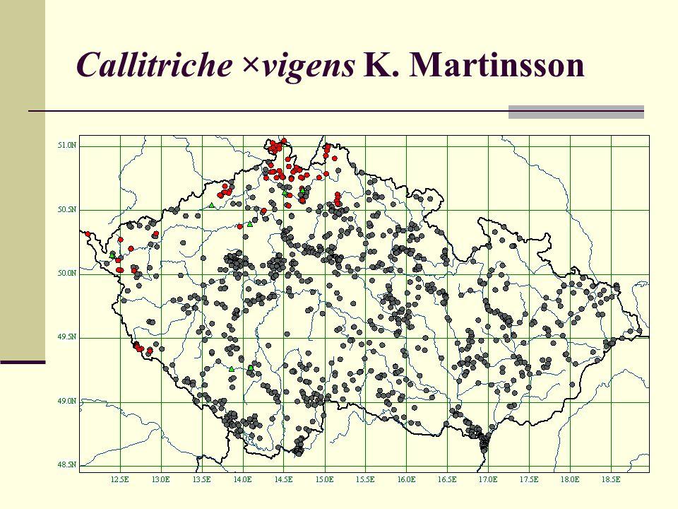 Callitriche ×vigens K. Martinsson