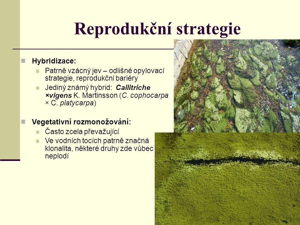 Reprodukční strategie