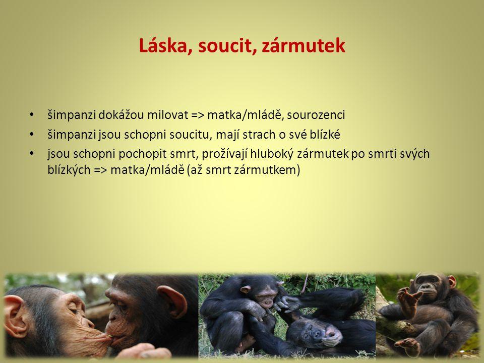 Láska, soucit, zármutek šimpanzi dokážou milovat => matka/mládě, sourozenci. šimpanzi jsou schopni soucitu, mají strach o své blízké.
