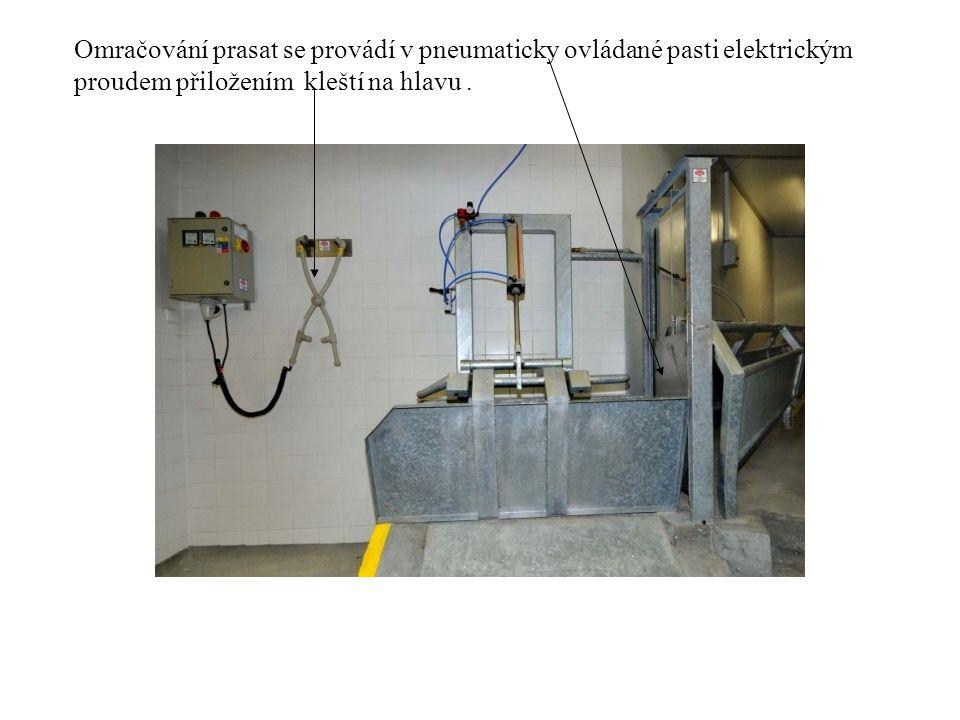 Omračování prasat se provádí v pneumaticky ovládané pasti elektrickým proudem přiložením kleští na hlavu .