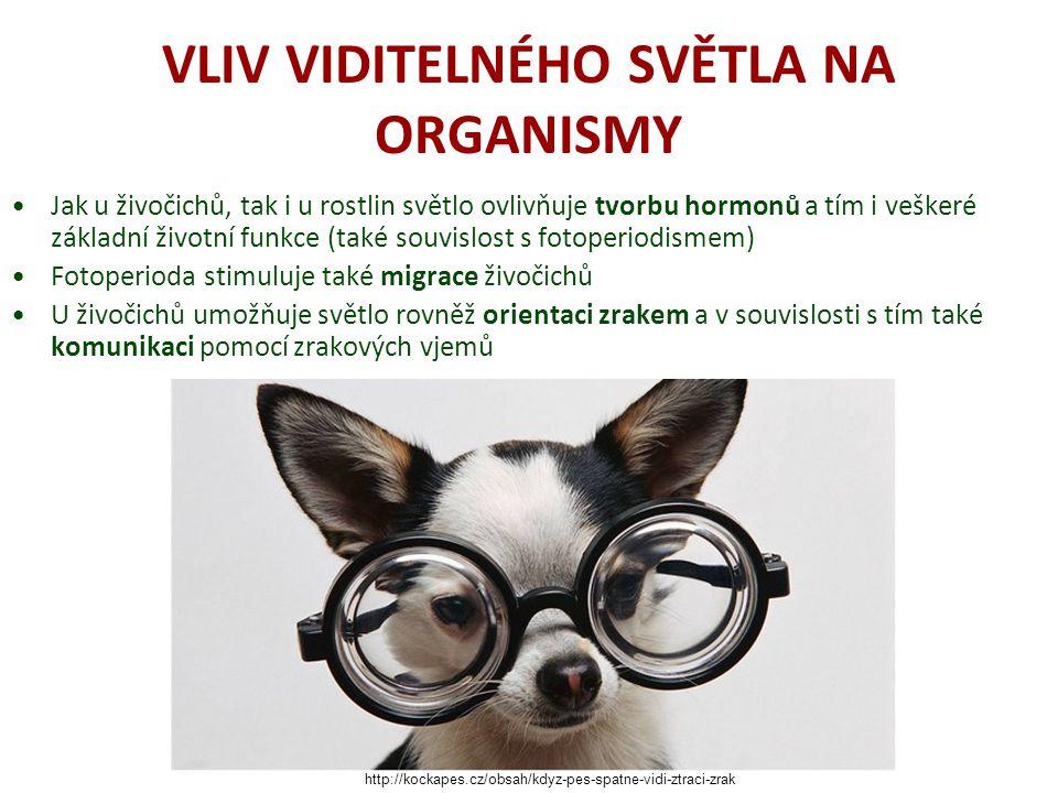 VLIV VIDITELNÉHO SVĚTLA NA ORGANISMY