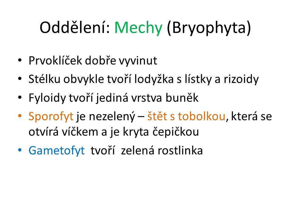 Oddělení: Mechy (Bryophyta)