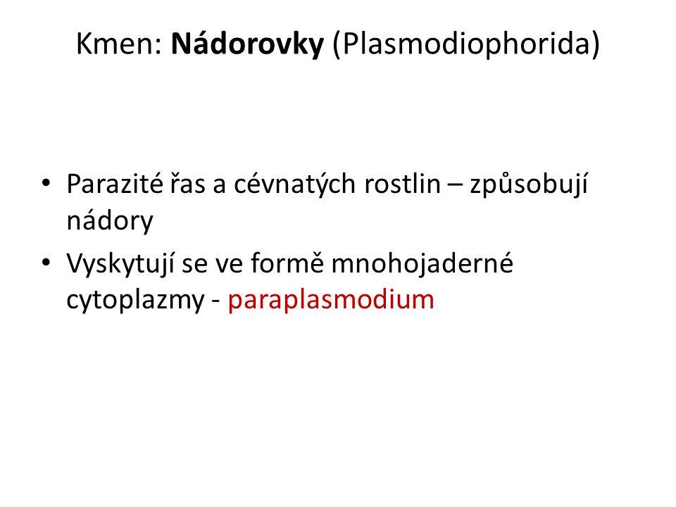Kmen: Nádorovky (Plasmodiophorida)