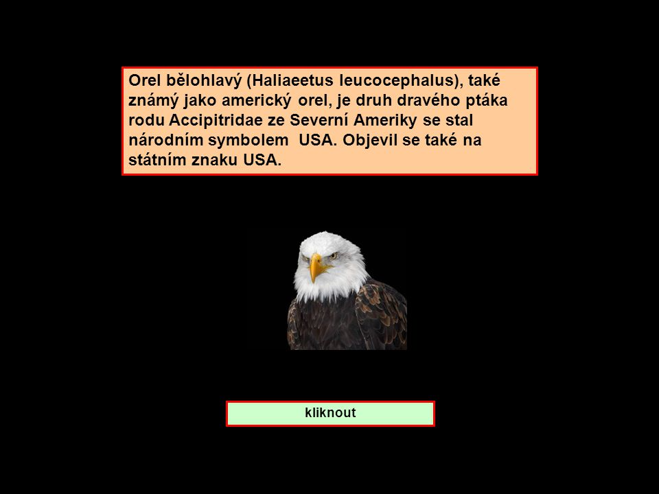 Orel bělohlavý (Haliaeetus leucocephalus), také známý jako americký orel, je druh dravého ptáka rodu Accipitridae ze Severní Ameriky se stal národním symbolem USA. Objevil se také na státním znaku USA.