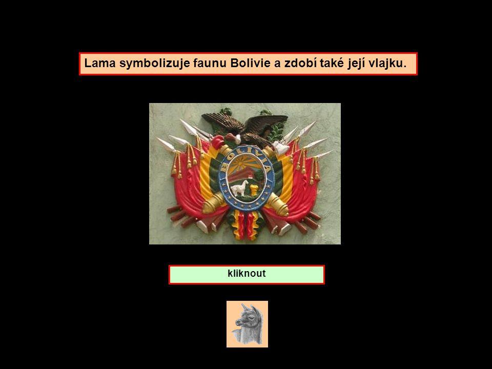 Lama symbolizuje faunu Bolivie a zdobí také její vlajku.