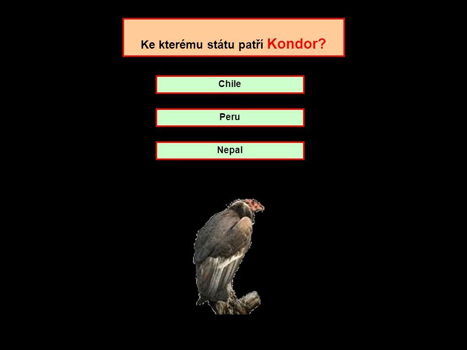 Ke kterému státu patří Kondor