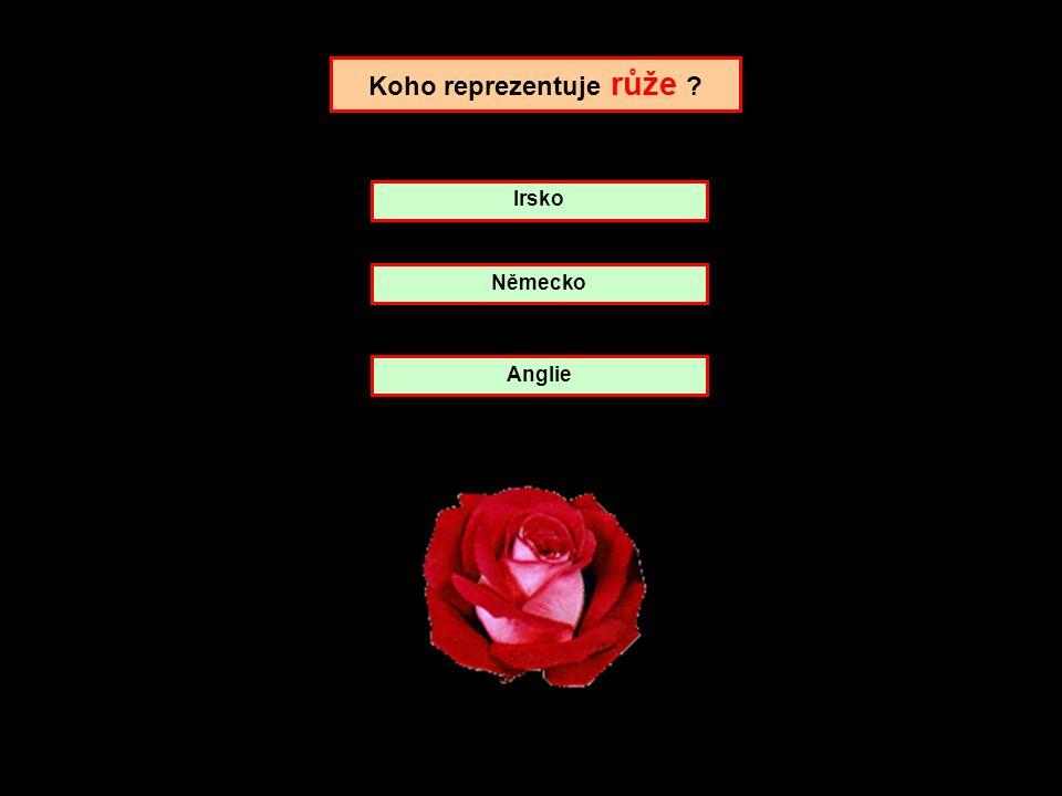 Koho reprezentuje růže