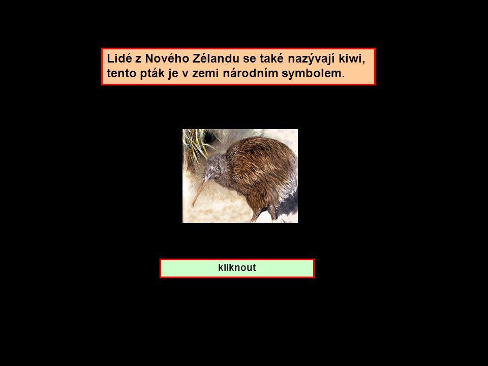 Lidé z Nového Zélandu se také nazývají kiwi,