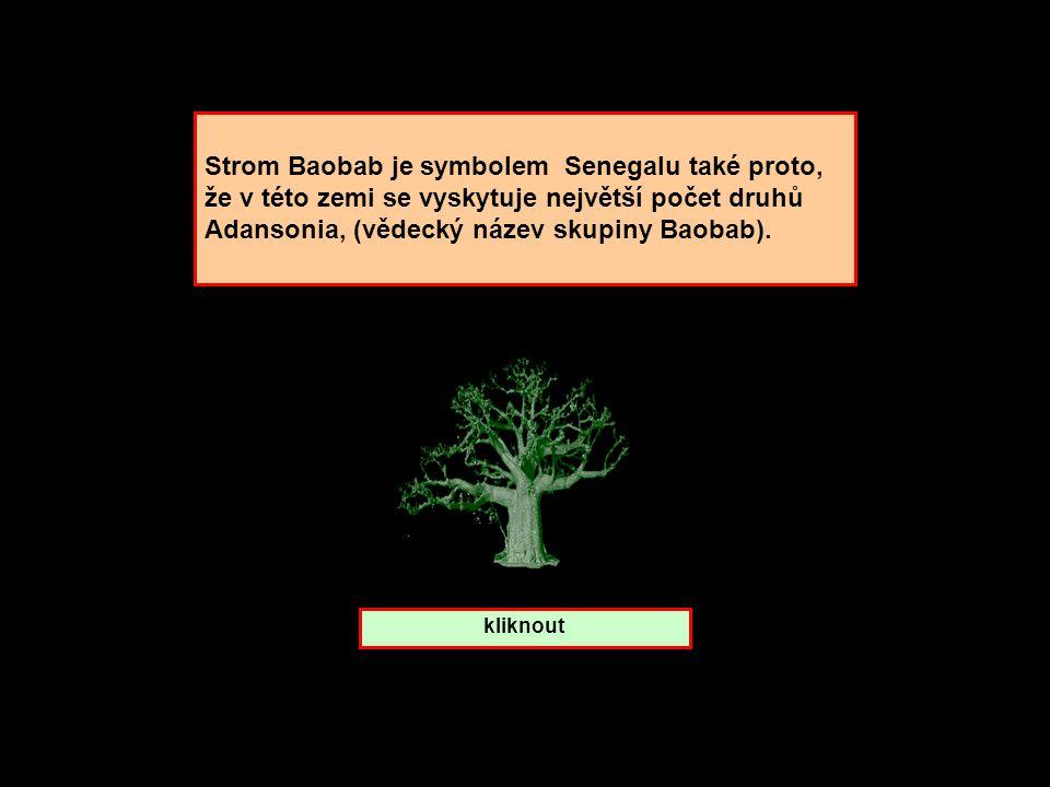 Strom Baobab je symbolem Senegalu také proto,