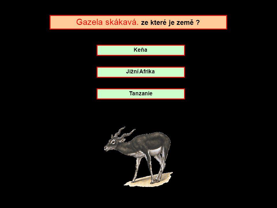 Gazela skákavá. ze které je země