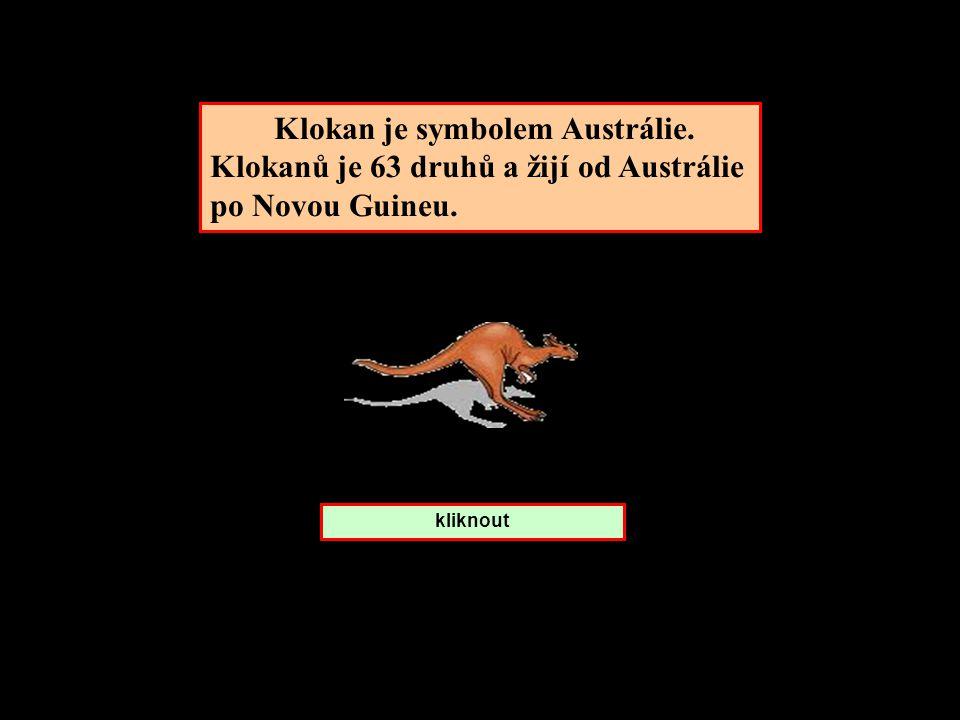 Klokan je symbolem Austrálie. Klokanů je 63 druhů a žijí od Austrálie