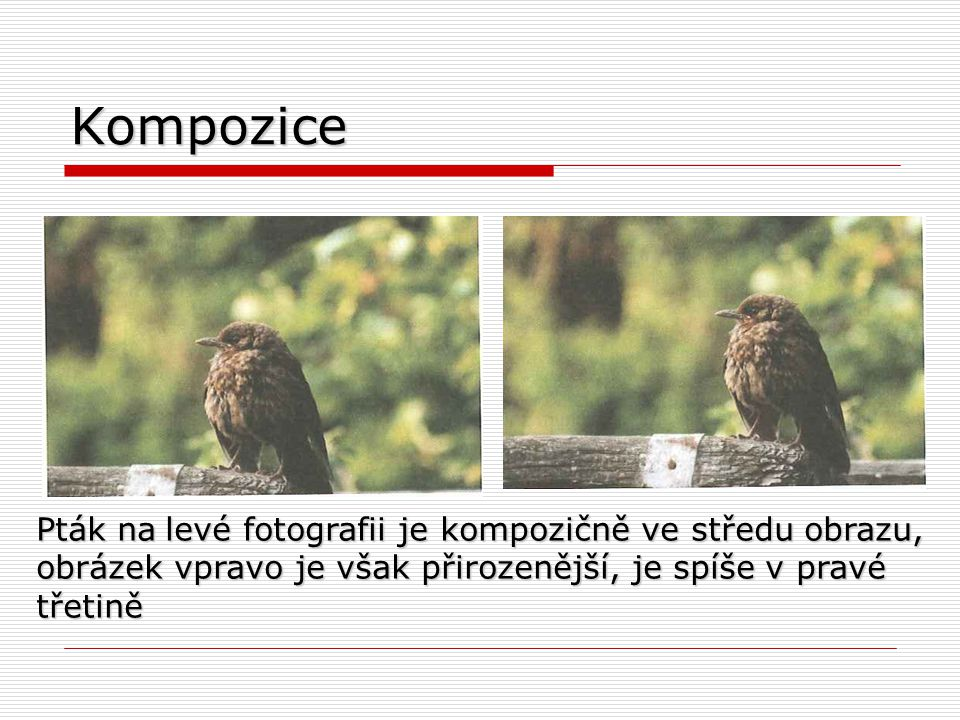 Kompozice Pták na levé fotografii je kompozičně ve středu obrazu, obrázek vpravo je však přirozenější, je spíše v pravé třetině.