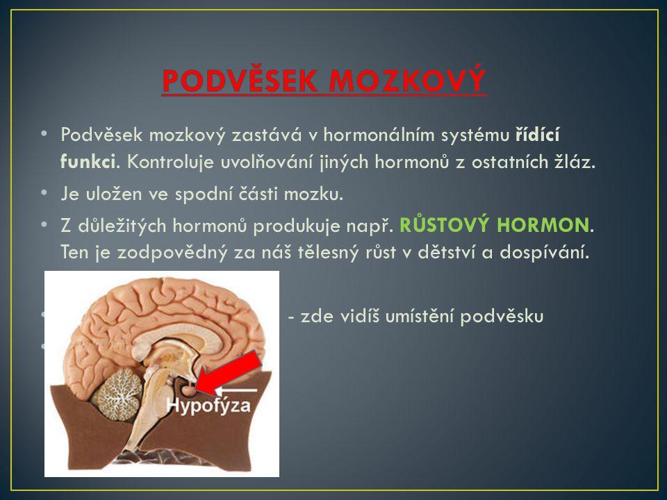 PODVĚSEK MOZKOVÝ Podvěsek mozkový zastává v hormonálním systému řídící funkci. Kontroluje uvolňování jiných hormonů z ostatních žláz.