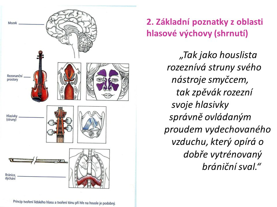 2. Základní poznatky z oblasti hlasové výchovy (shrnutí)