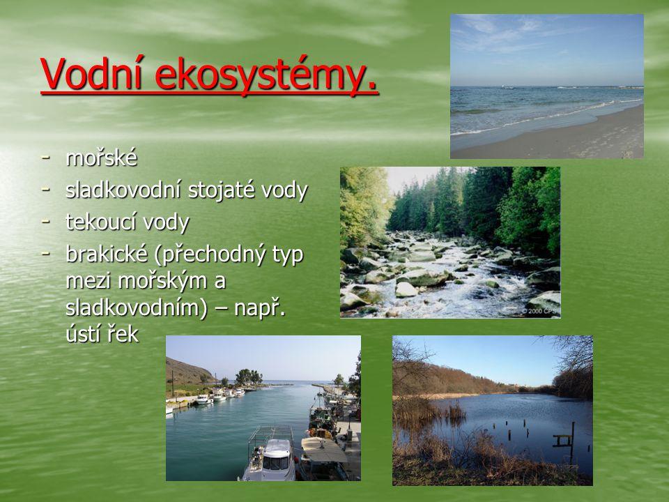 Vodní ekosystémy. mořské sladkovodní stojaté vody tekoucí vody
