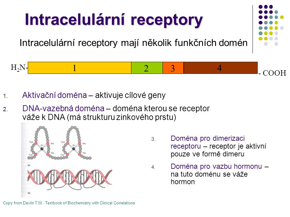 Intracelulární receptory
