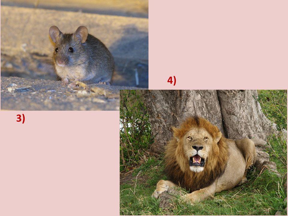 4) 3) Doplň další zvířata, která vystupují často v pohádkách, zapiš je do sešitu a pokus se všechna nakreslit!