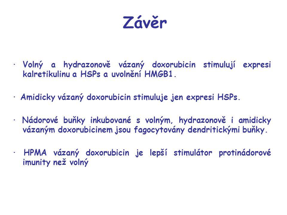 Závěr · Volný a hydrazonově vázaný doxorubicin stimulují expresi kalretikulinu a HSPs a uvolnění HMGB1.