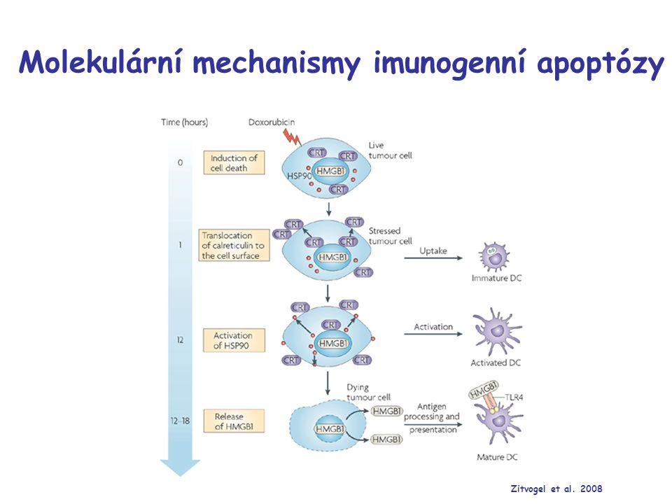 Molekulární mechanismy imunogenní apoptózy