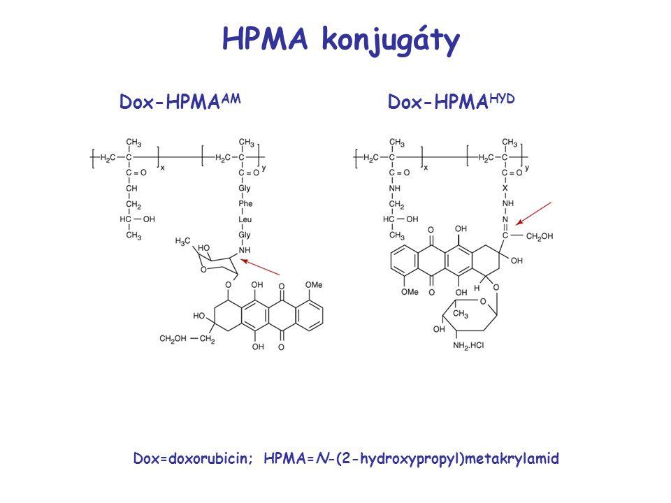 HPMA konjugáty Dox-HPMAAM Dox-HPMAHYD