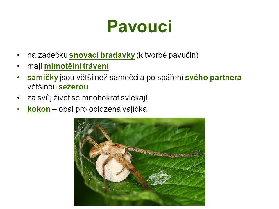 Pavouci na zadečku snovací bradavky (k tvorbě pavučin)