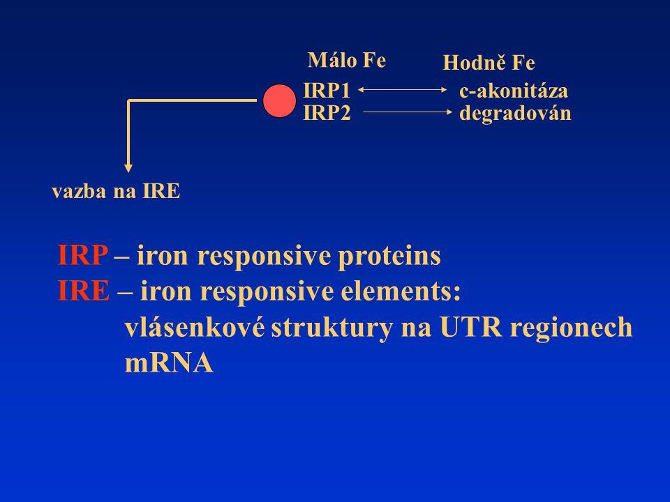 Málo Fe Hodně Fe. IRP1. c-akonitáza. IRP2. degradován. vazba na IRE.