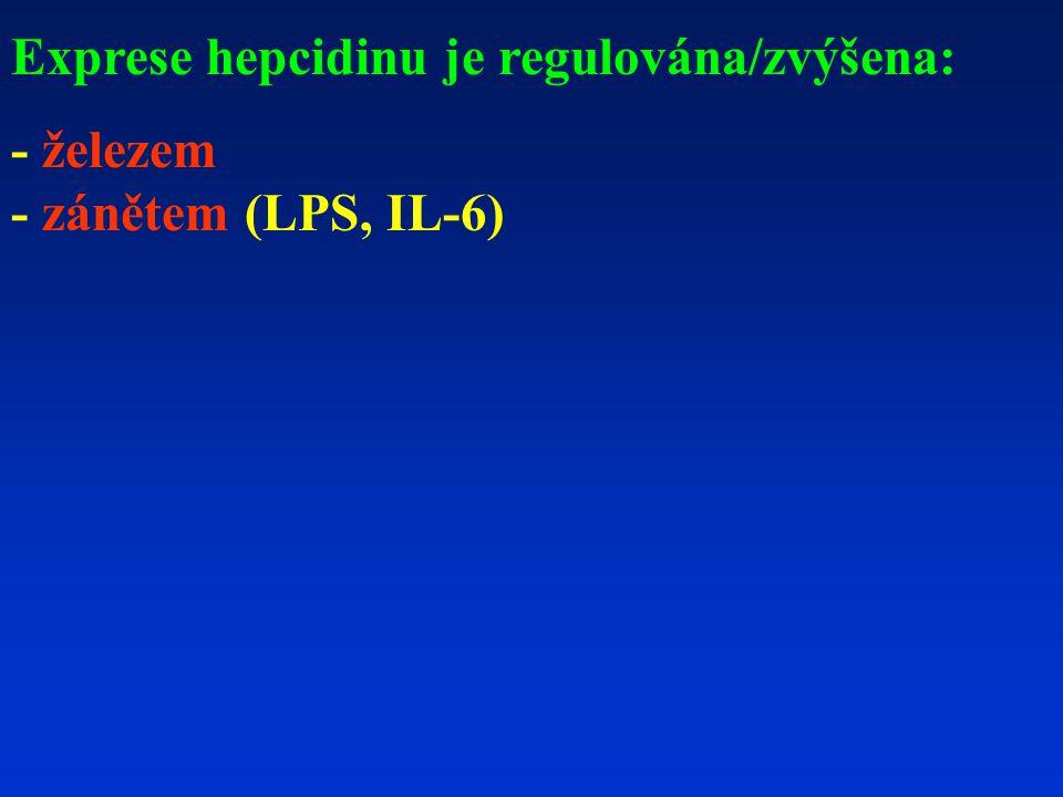 Exprese hepcidinu je regulována/zvýšena:
