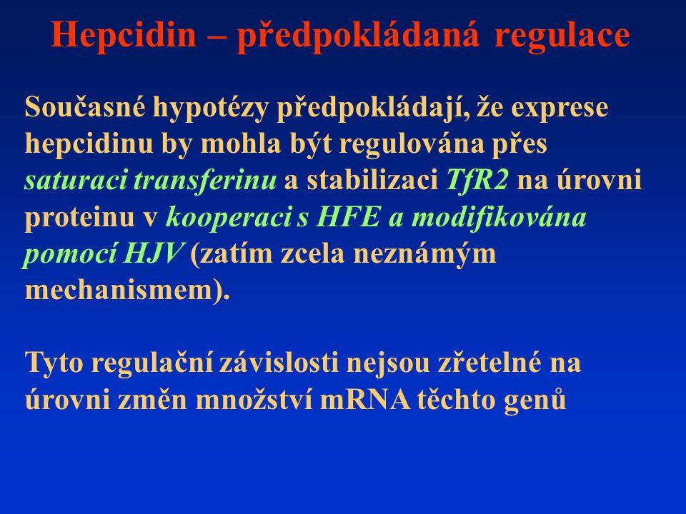 Hepcidin – předpokládaná regulace